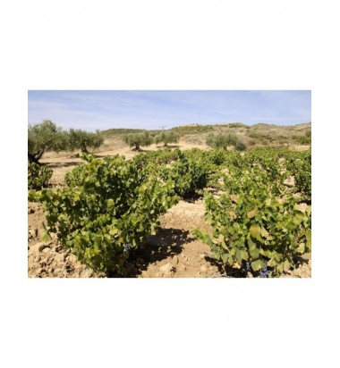 Kimera 2017 - LMT wines - Garnatxa, viñas viejas, Navarra, Crianza en tinaja