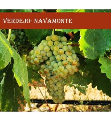 Navamonte Blanco 2019 * Rueda, Verdejo, Vitininícola Navamonte