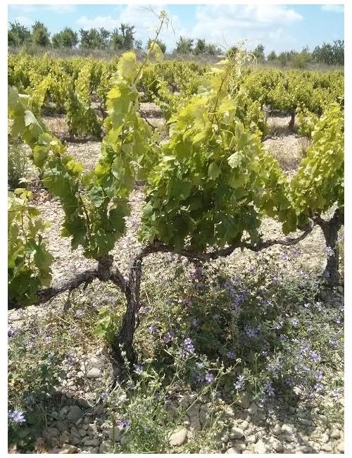 Masusta 2017 - LMT wines - Garnatxa, viñas viejas, Navarra